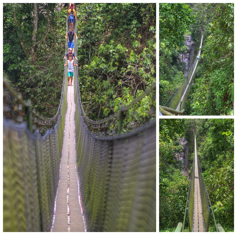 hanging bridge, jungle, rainforest, costa rica, quepos